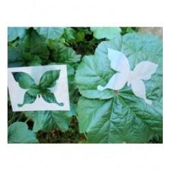 Pochoir papillon P0151 pour vos pages, vos cartes, vos murs
